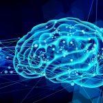 理系脳って何?